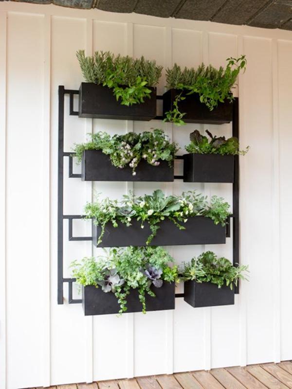 Hanging plant fixture